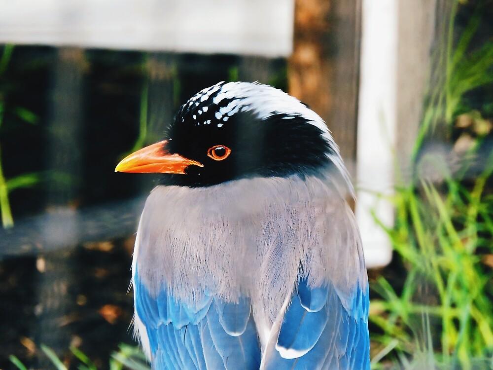 Blue Bird by Danimin8888