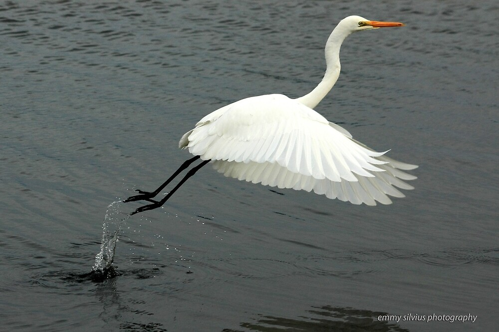 Eastern Great Egret (893) by Emmy Silvius