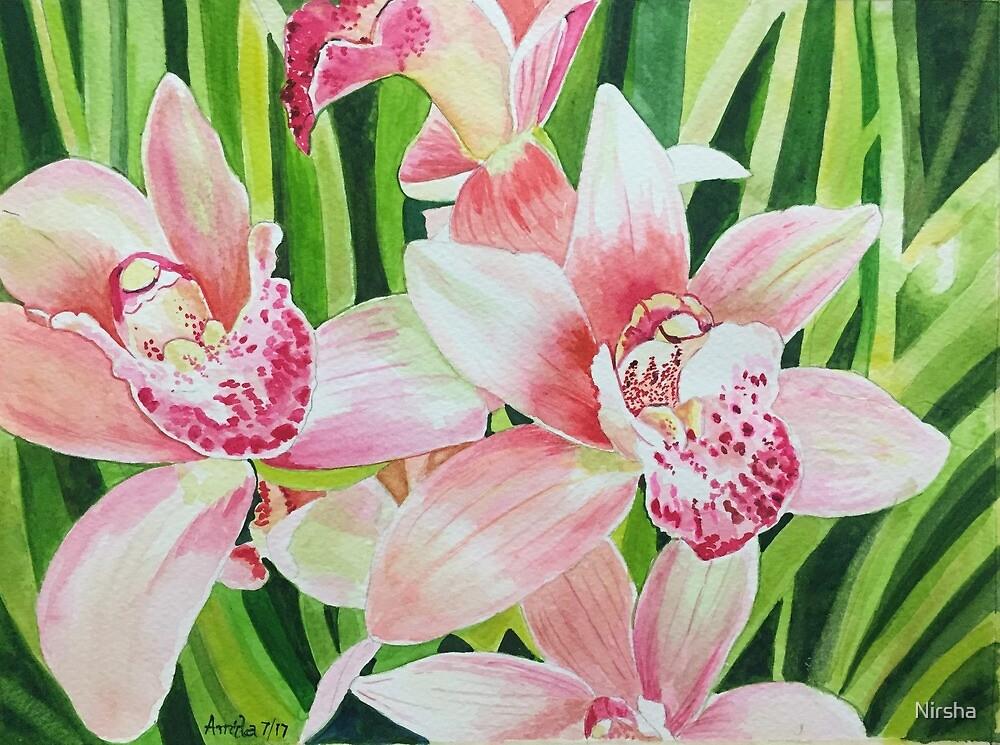 Pink Cymbidiums, creating happiness! by Nirsha