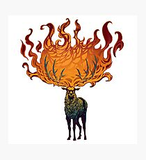 Baratheon Stag - Ours is the Fury Photographic Print
