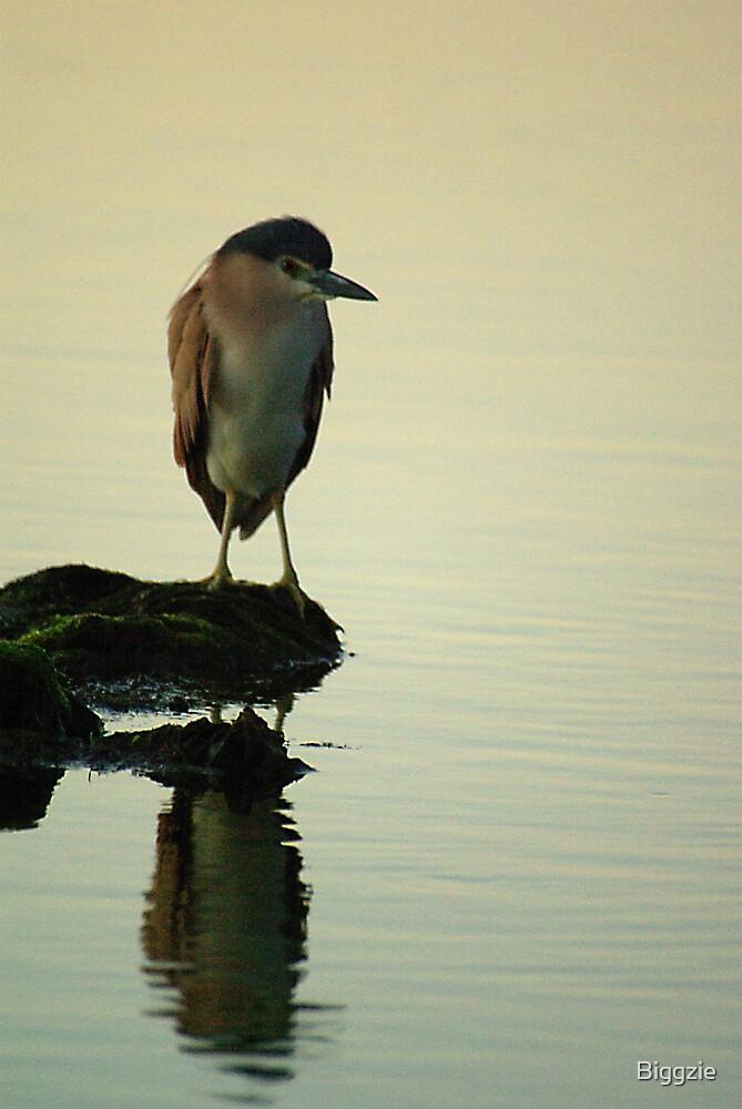 Nankeen Night Heron by Biggzie