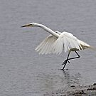 Eastern Great Egret (4617) by Emmy Silvius