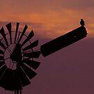 Sunset Watch by Biggzie