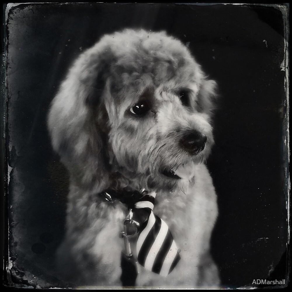 Dog by ADMarshall