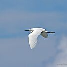 Little Egret (879) by Emmy Silvius