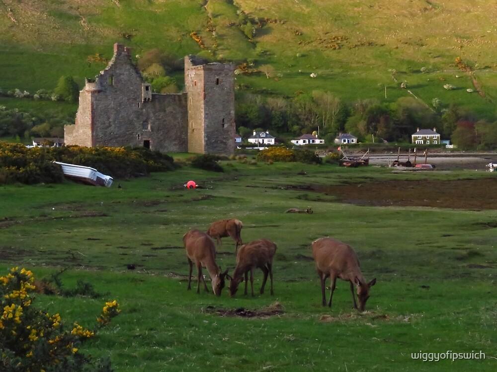Red Deer, Lochranza Castle, Arran by wiggyofipswich
