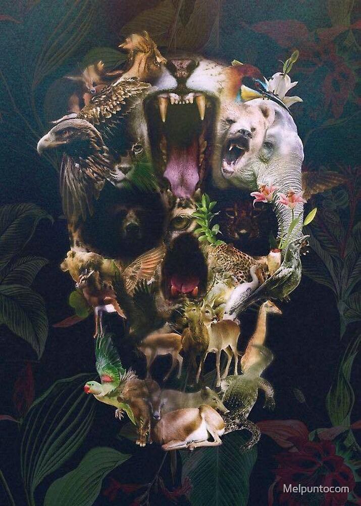 animals skull  by Melpuntocom