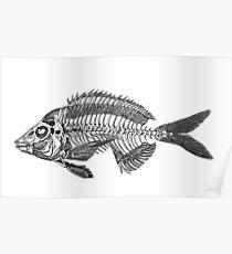 Animal Anatomy Illustration #1 - Fish Skeleton Drawing Poster