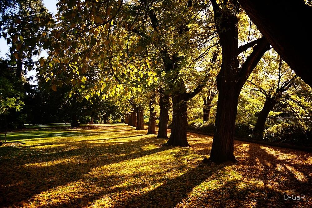 Autumn in Albury by D-GaP