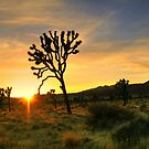 Joshua Tree National Park by Anne-Marie Bokslag