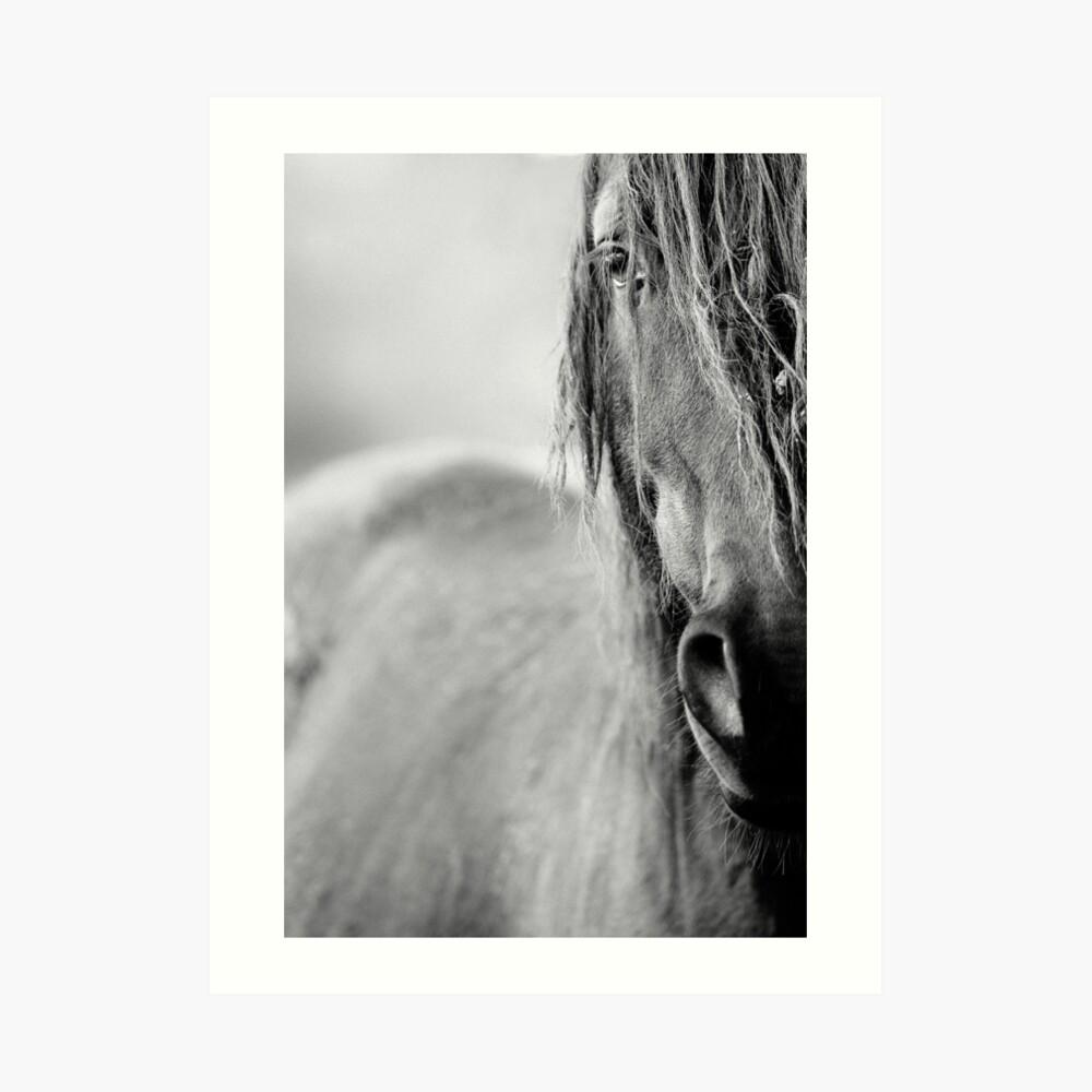 Pferd Kunstdruck