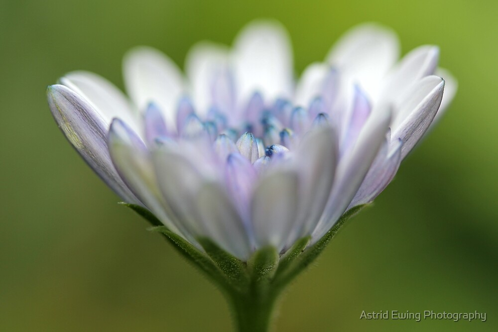 Cone of Jewels by Astrid Ewing Photography