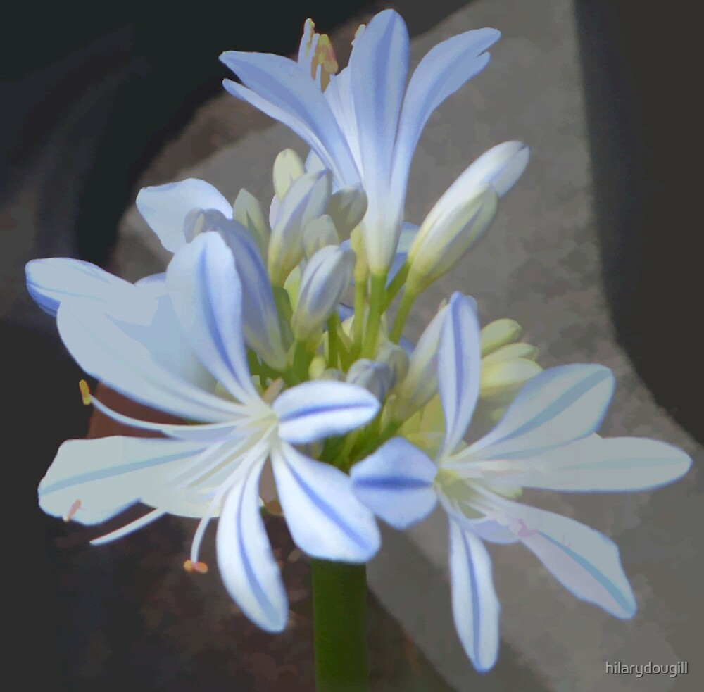 abstract of Agapanthus by hilarydougill