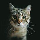 Portrait of a cat by Michael Schauer