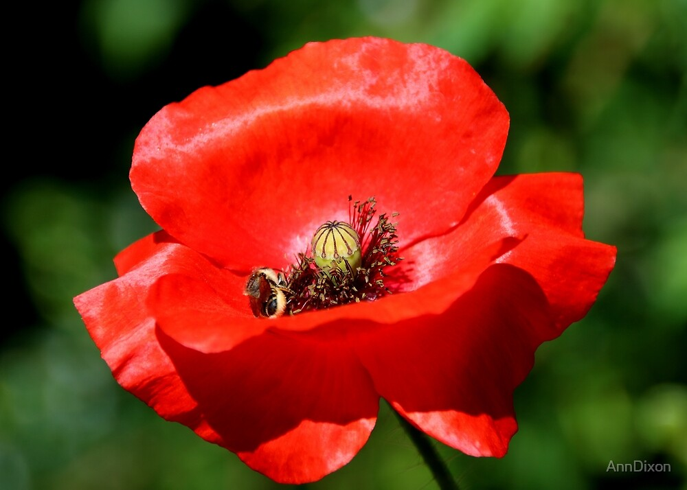 Bee & Poppy by AnnDixon