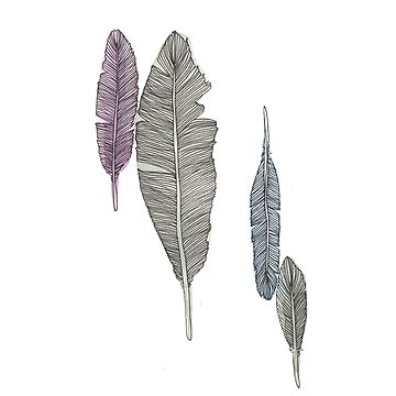 Feathers #2 by amylewisartist