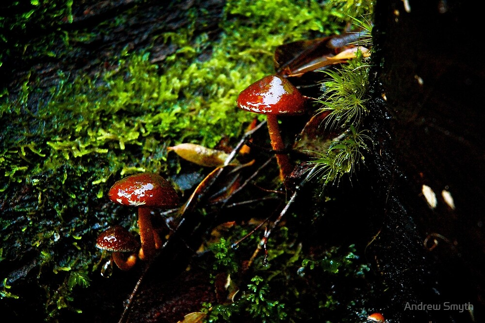 Tarkine Fungi 2 by Andrew Smyth