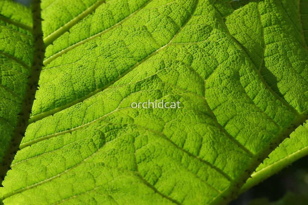 Leaf light by orchidcat