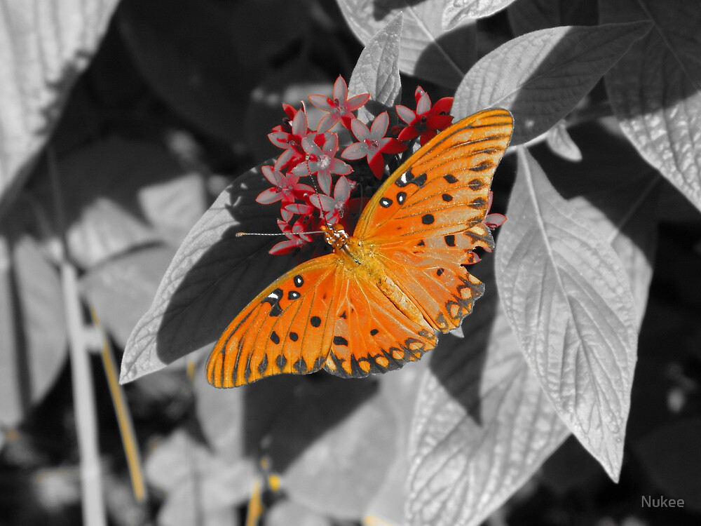 Butterfly in a Black & White World by Nukee