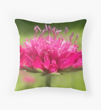 Scabiosa ~ Greater Knapweed Throw Pillow