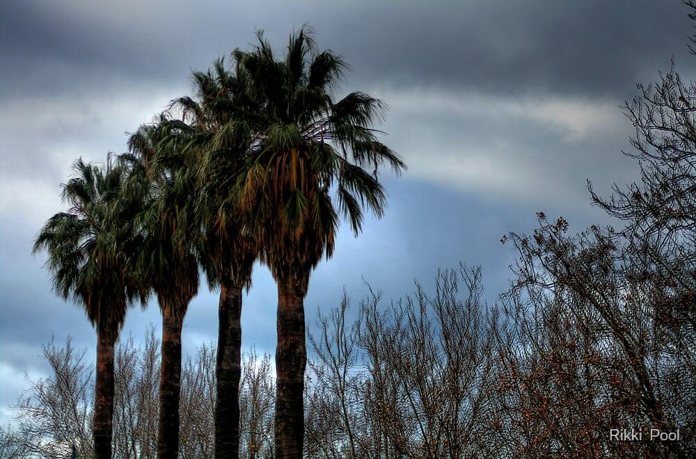 Palms by Rikki  Pool