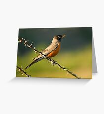 Robin on Barbed Wire Greeting Card