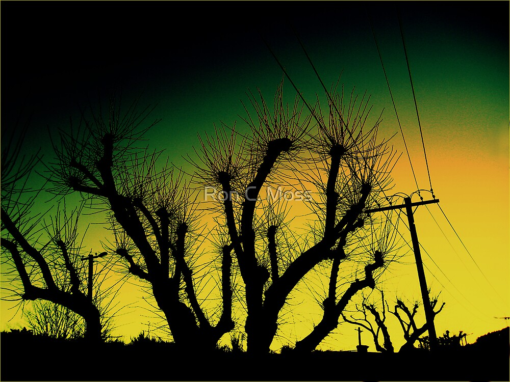 Wired Sunset by Ron C. Moss
