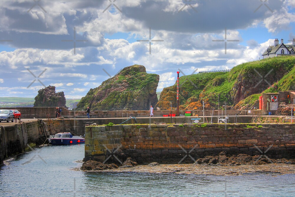 St. Abbs Harbour by Tom Gomez