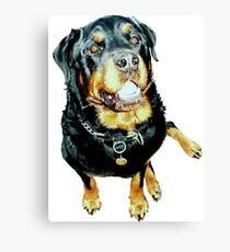 Male Rottweiler Photo Portrait Canvas Print