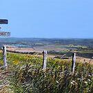 Along The South Downs Way by Paula Oakley