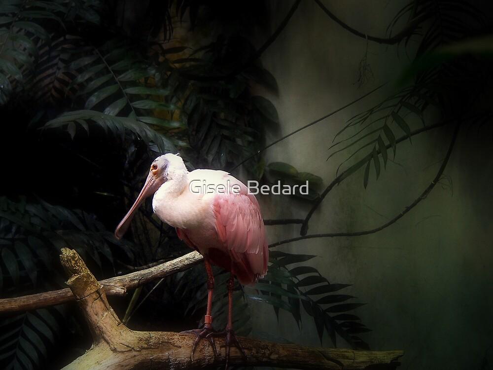 Bird in the mist by Gisele Bedard
