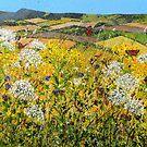Wild Summer by Paula Oakley