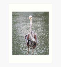 Goofy Heron Art Print