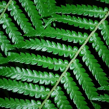 Green Fern by NessFlett