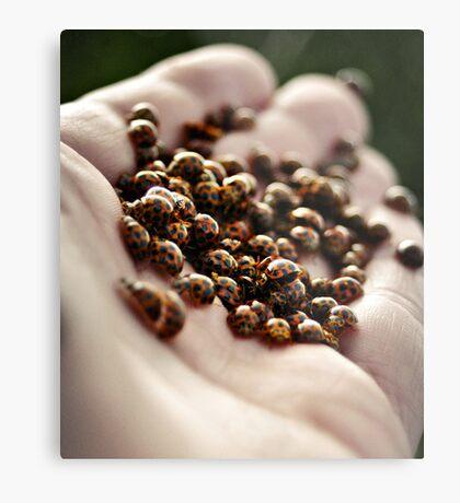 Lady Beetles Metal Print