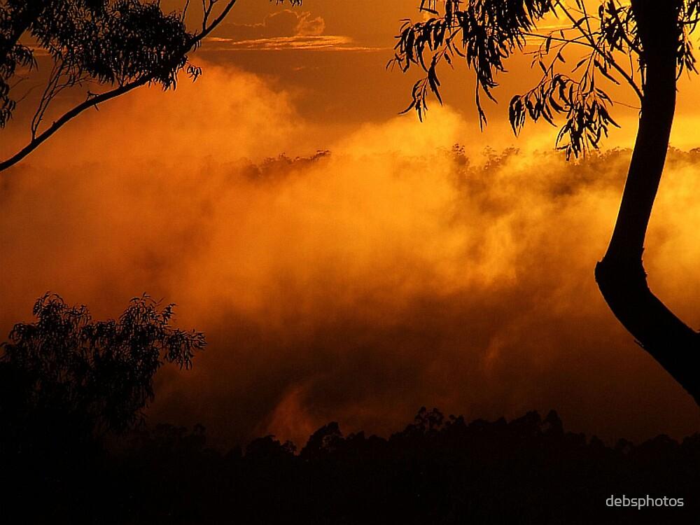 """""""Golden Glow"""" by debsphotos"""