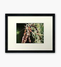Red seeds ! Framed Print