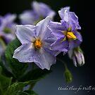 Uenuku Flower by cdwork