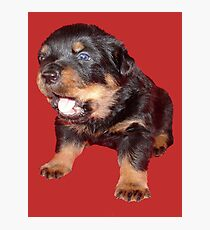 Rottweiler Puppy with Funny Cute Geeky Expression Photographic Print