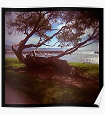 holga madness.....twisted tree down by the sea Poster