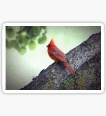 Sir Red Cardinal Sticker