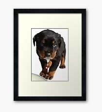 Cute Rottweiler Puppy WIth Milk On Muzzle Framed Print