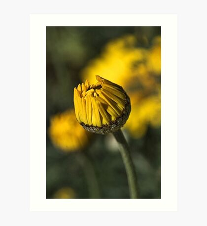 Daisy Yellow Art Print