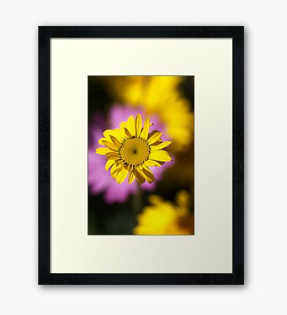 Floating On A Daisy Cloud Framed Print