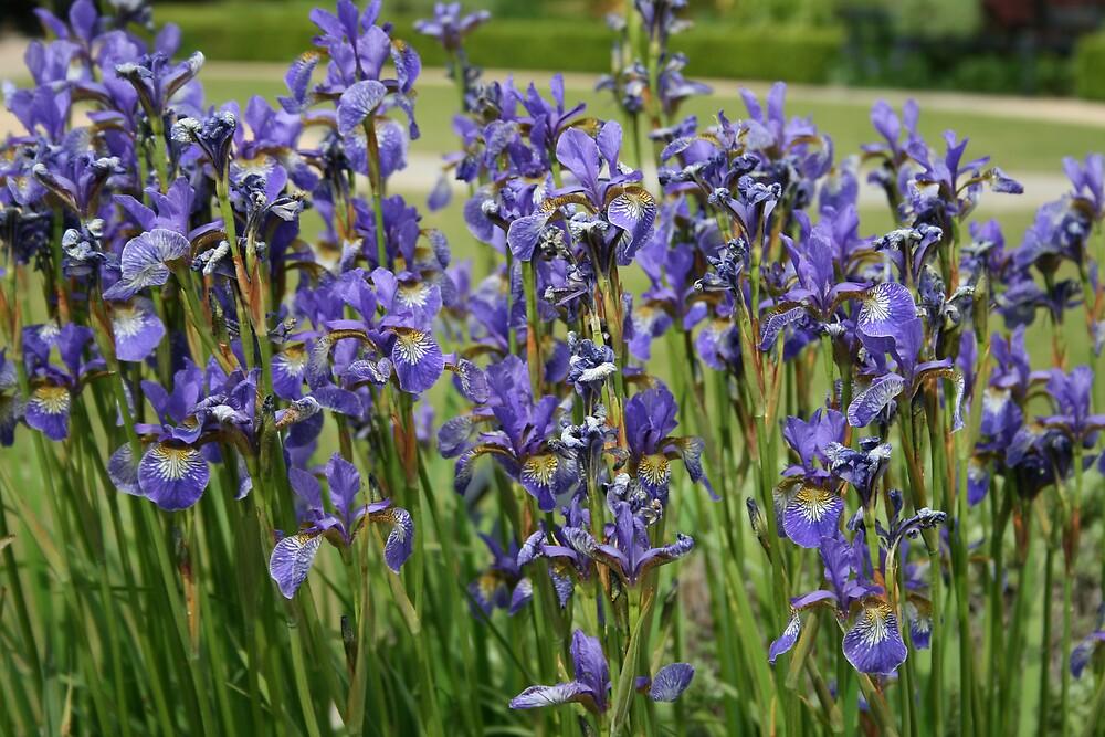 Blue Garden by izwanism