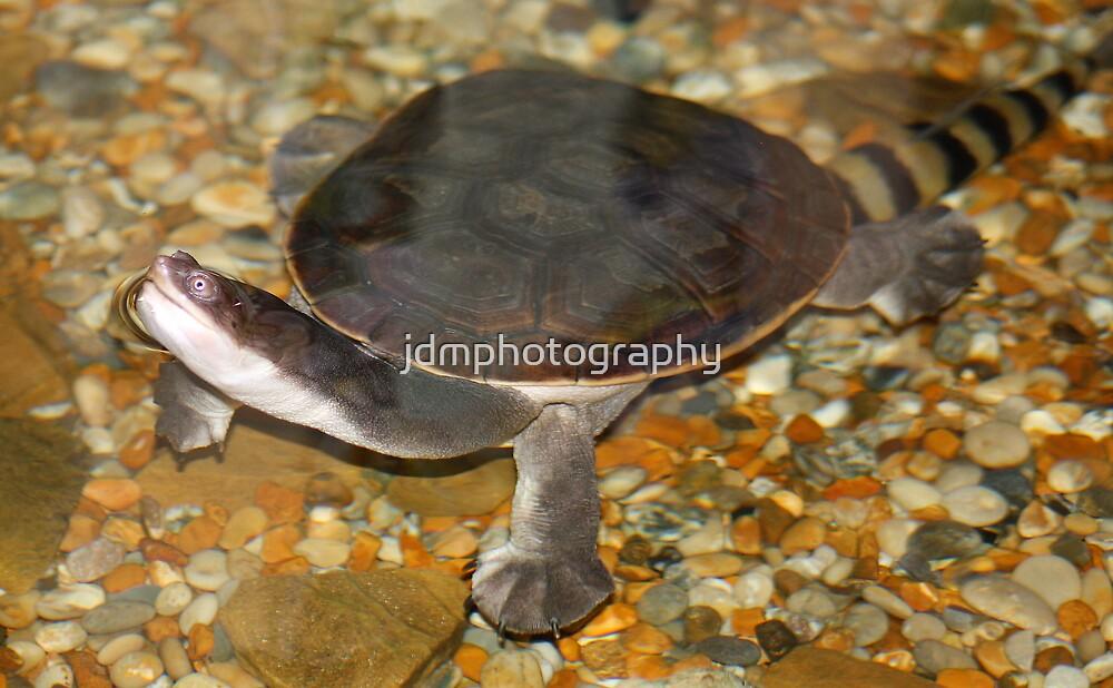 Snake-neck turtle by jdmphotography