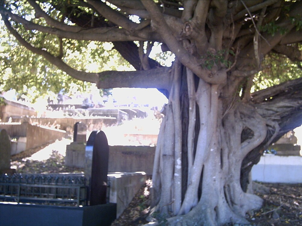 photograph taken of a strange looking tree by meljak robinson