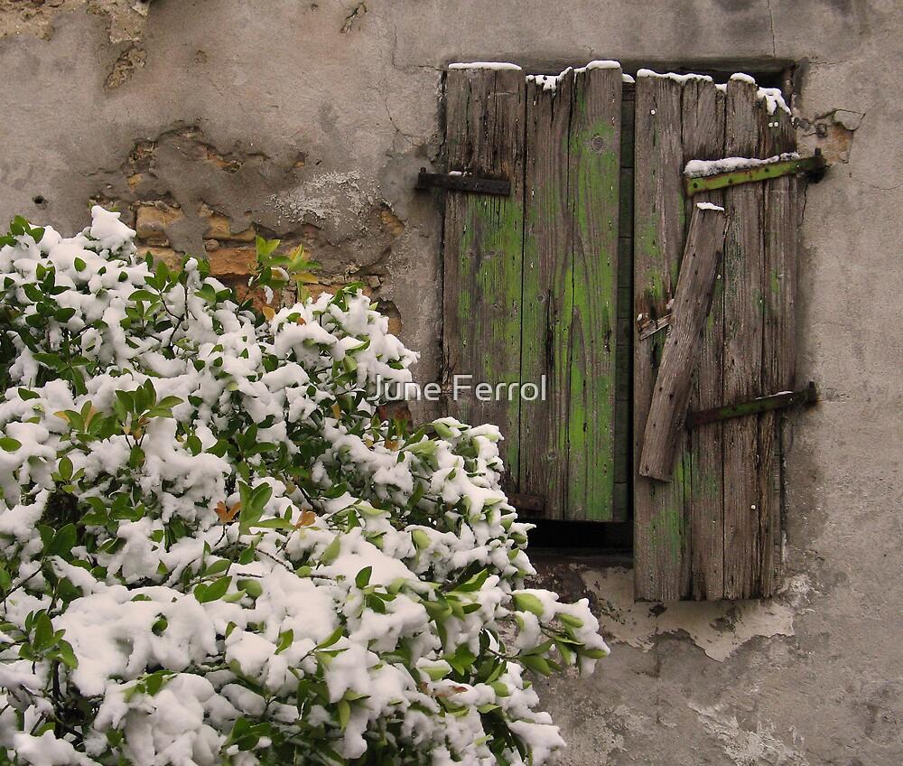 IT SNOWED by June Ferrol