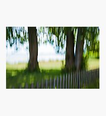 Summer Trees by Fence Photographic Print