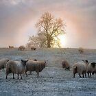 Winter Sun by Becca  Cusworth
